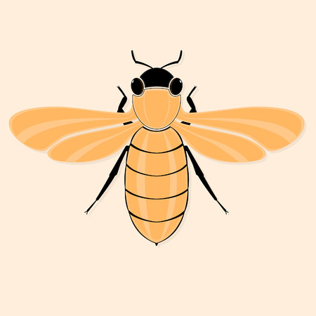 Background with stylized bee. Vector