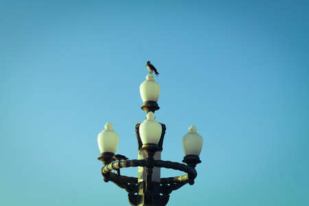 Crow sitting on the street light.  Daytime, Baku, Azerbaijan. High park.