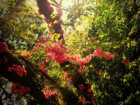Jardin d'Eden Banque d'images