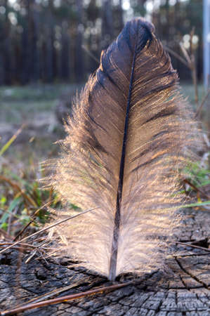 white bird: black and white bird feather Stock Photo