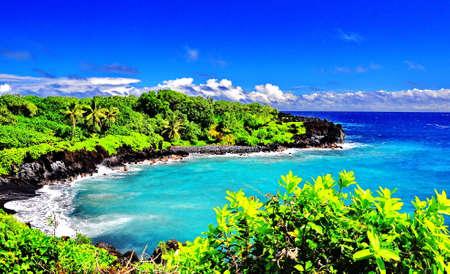 Tropical Oasis photo