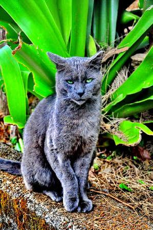 Feline Finesse