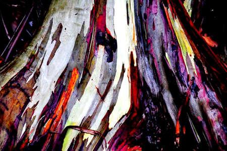 Eucalyptus Tree Along the Road to Hana