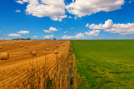 Colorful meadow and straw field with blue cloudy sky. Picture with green grass, yellow golden straw in thirds with the blue sky. 免版税图像
