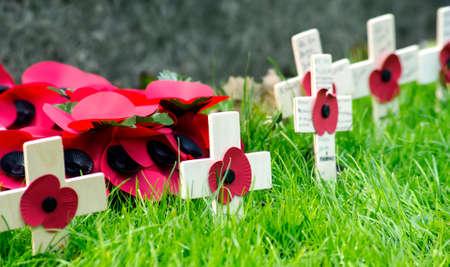 remembrance day poppy: A remembrance day poppy on a cross