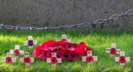 remembrance day poppy: A remembrance day poppy on the crosses