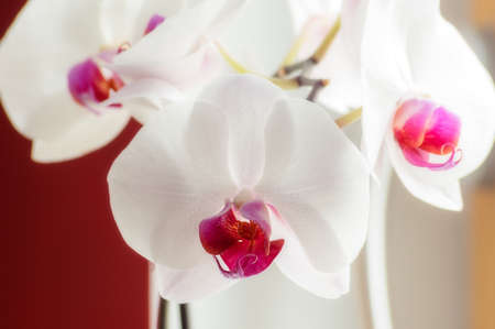 windowsill: Purple and white orchid on the windowsill.