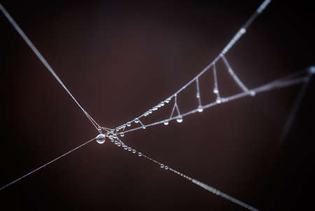 Drops on spiderweb. Stock Photo