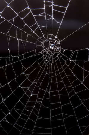 Drops on spiderweb. Stock Photo