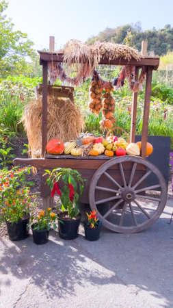 Wheelbarrow with vegetables in the garden.