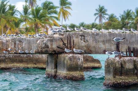 Gulls sitting on a concrete structure near the sea shore.