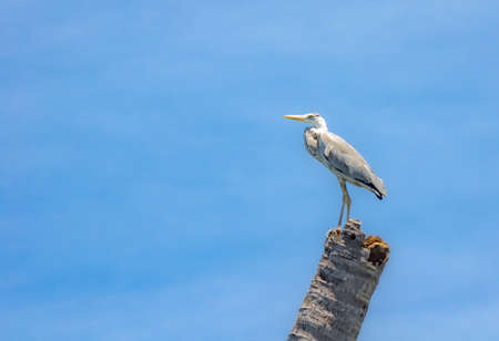 White heron sitting on a  tree against the blue sky.