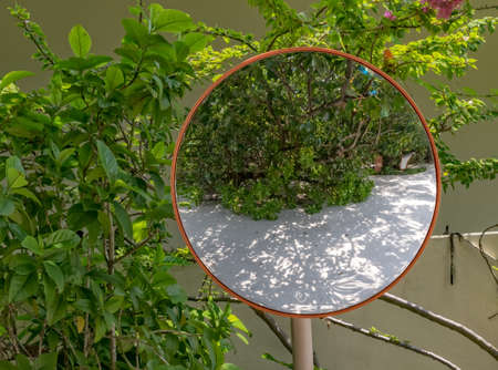 Green bushes reflected in a circular mirror. Stock Photo