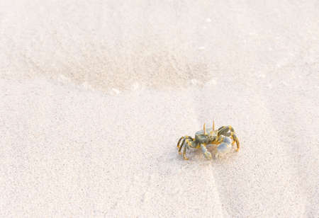 A picture of a crab taken on a white beach somewhere in the Maldives. Stock Photo
