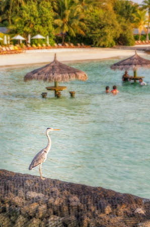 Heron sitting on the breakwater on one of the Maldivian islands.