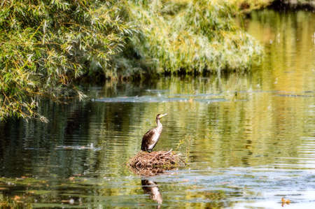 Heron standing in the water of a London pond. Stock Photo