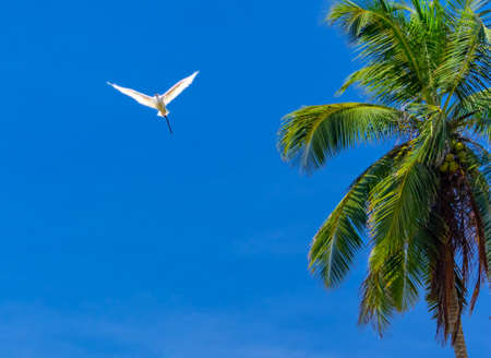 White heron fly against the blue sky.