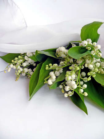 aspidistra: lily of the valley