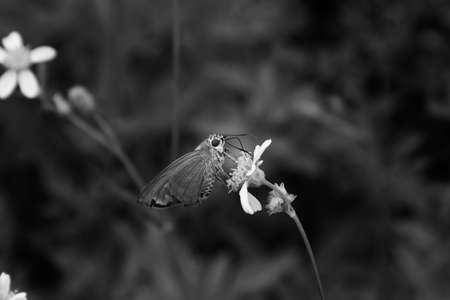 cycles: ciclos de vida de la mariposa.