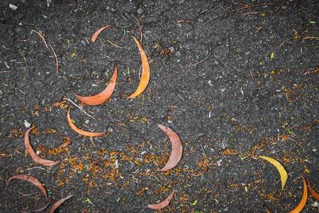 asphalt texture: Yellow leaves on asphalt texture road. Stock Photo