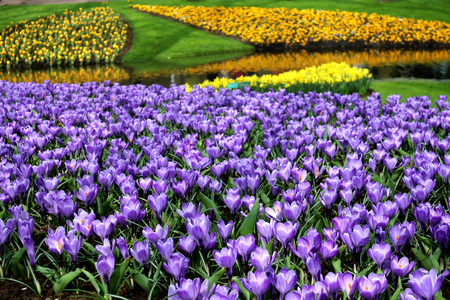 annealed: Flowers in Holland Park, spring time garden in Netherlands