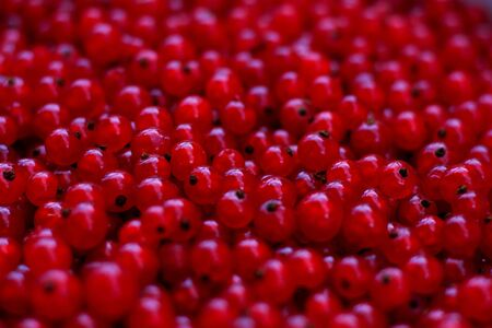 currants: Red currants as a background