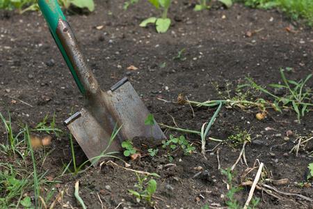 spade: Spade in the ground, autumn garden work