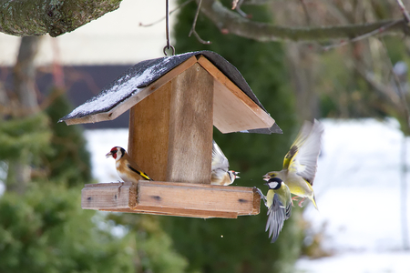 Songbirds on a bird feeder fighting for food. Chickadee, Goldfinch and hawfinch When feeding in winter