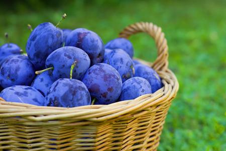 Ripe plums in a wicker basket, grassy background