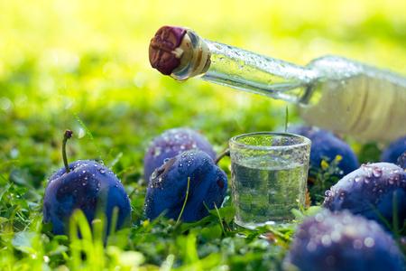 Pflaumenschnaps oder Schnaps mit frischen und reifen Pflaumen im Gras nach dem Regen, Flasche hausgemachter Schnaps und Jiggers
