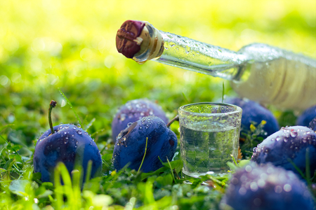 Plum brandy or Schnapps with fresh and ripe plums in the grass after rain, Bottle of homemade brandy and Jiggers Stock fotó
