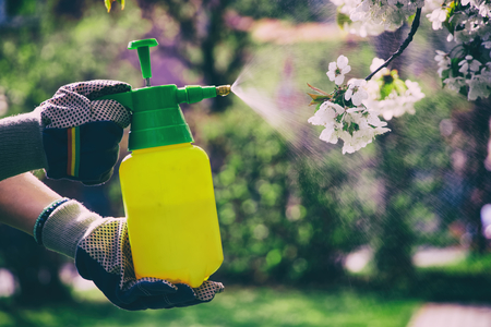 Woman with gloves spraying a blooming fruit tree against plant diseases and pests. Use hand sprayer with pesticides in the garden. Stock fotó