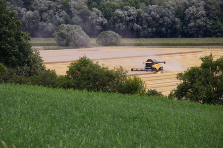 machinery: Combine harvester machine working on ripe wheat crops. Harvest of wheat field at countryside. Heavy agricultural machinery during the summer harvest. Stock Photo