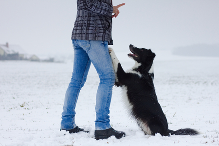 owner is training her dog, border collie, command sit down, friendship between woman  and her dog