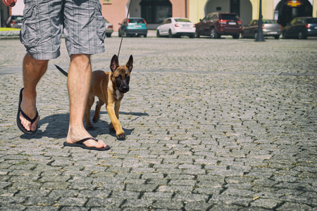 Man is on a walk through the city with his Belgian shepherd puppy. Young dog with his owner on the street