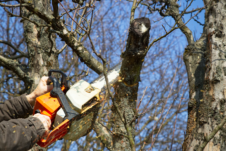 Man cutting branch tree using chainsaw. Gardener working in the garden during springtime. Petrol chainsaw in male hands