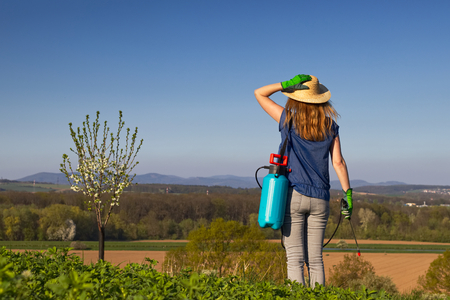 Female gardener wearing gardening glove and straw hat is ready for spraying blossoming plum tree using a spray bottle. Gardening concept.