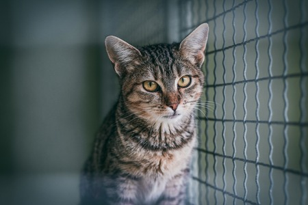 Abandoned cat in cage. Animal shelter. Hope for pet adoption. Banco de Imagens