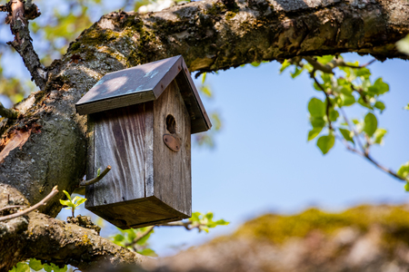 Birdhouse sur arbre au printemps. Branche d'arbre fruitier avec nichoir.