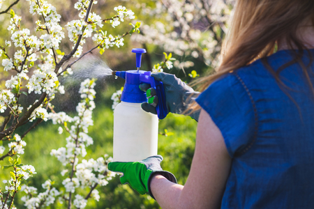 Farmer with gardening glove spraying a blooming fruit tree against plant diseases and pests. Use spray bottle with insecticide in orchard. Stock Photo