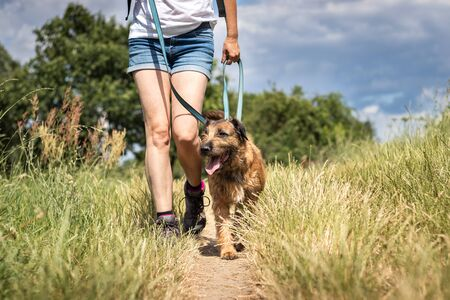 Animal trainer walking with her dog in nature. Dog obedience training. Woman with her animal best friend enjoying summer outdoors Фото со стока
