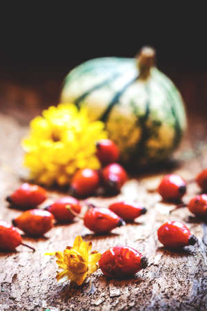 Rose hip, dried flower, gourd and pumpkin in background. Autumn harvest festival. Red dog rose berry herb. Thanksgiving day still life concept