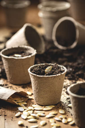Planting seeds into peat pot on table.