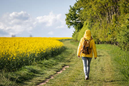 Lone woman walk on path between forest and oilseed field. Spring hike in nature