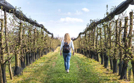Woman walking in apple orchard at spring. Organic farm with fruit trees in a row