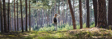 Woman hiking at footpath in forest. Panoramic view of pine woodland with female tourist person with backpack and hat 免版税图像