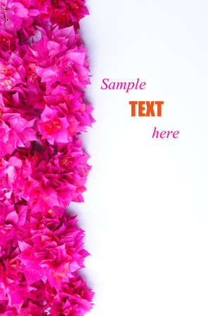 hot pink: Bougainvillea flowers with sample text