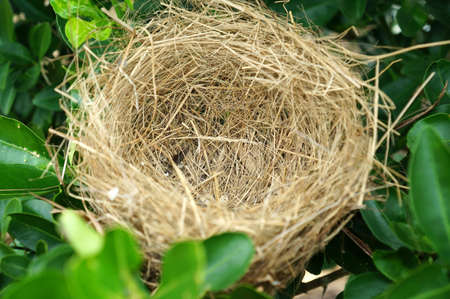 Empty nest on green leaf