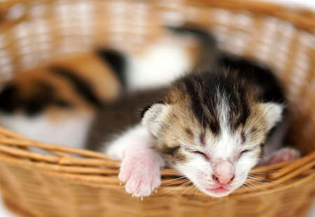 Close up small kitten sleeping at the basket photo