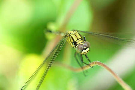 Close up of resting dragonfly photo